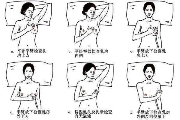 胸部服饰款式图手绘